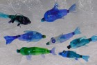 Ryby a medúzy