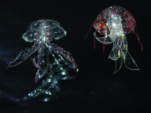 Veronika Richterová, PET-ART, pet lahev, umění z odpadu, recyklace, up-cycling, medůzy, talířovka